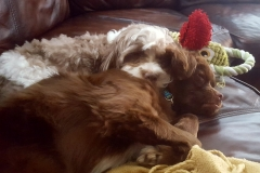 Buster & Chewy- Shannon Wilson