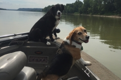 Lucy and her friend Frank the Beagle ,Dale Sides owner